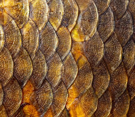 Smoked fish scales as background. Macro