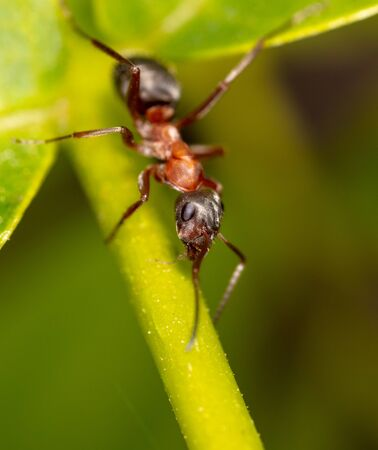 Closeup of an ant on a leaf on nature. Macro