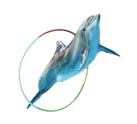 Dolphin jumping over a hoop isolated on a white background. Mammal marine animal.