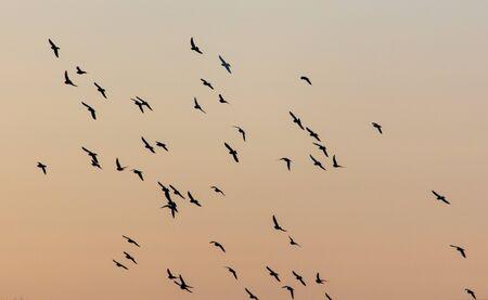 A flock of birds at dawn. Archivio Fotografico