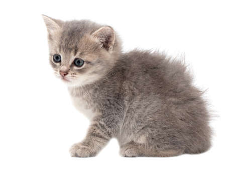 Little fluffy kitten isolated on a white background.