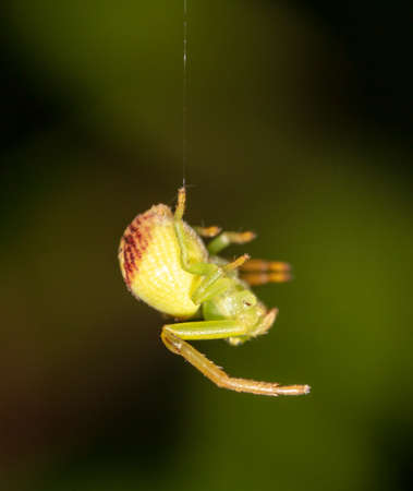 Close up of a spider in nature. Macro