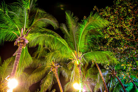 Large coconut palm leaves on the nature at night. Banco de Imagens - 167321302