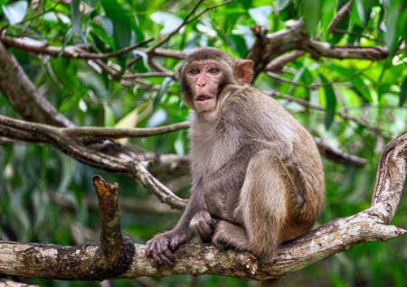Little monkey on a tree in the park. Animal mammal Banco de Imagens - 167321972