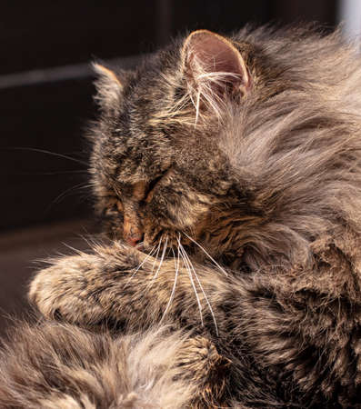 The cat washes himself with his tongue and paws. Banco de Imagens - 167321694