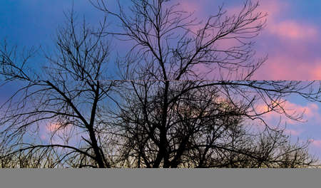 Bare branches of a tree at sunset. Background