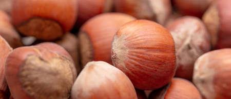 Close-up of fresh hazelnuts as background. Macro