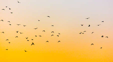 A flock of birds at dawn. Banco de Imagens - 167321125