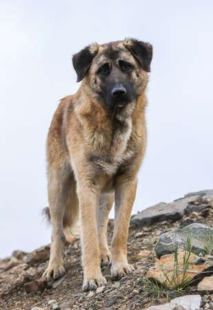 Portrait of a dog in the park. Banco de Imagens - 167321443