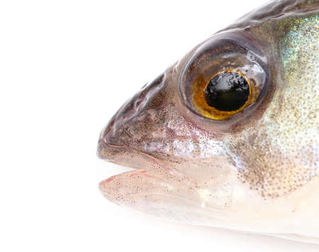 Fish head isolated on a white background. Close-up