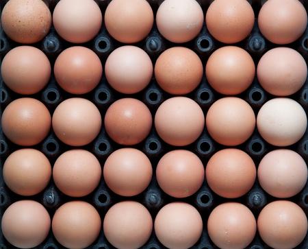 cerca de los huevos en un recipiente de pl�stico negro, tiro arriba