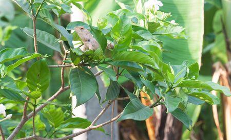 prin: lagarto cerca del jard�n, oriantal lagarto jard�n en la planta, jard�n naturaleza Foto de archivo