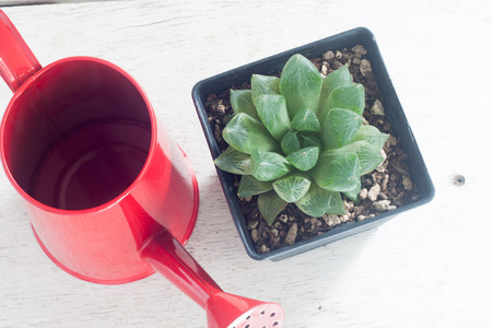 watering pot: a pot of growing cactus with red watering pot on wood table Stock Photo
