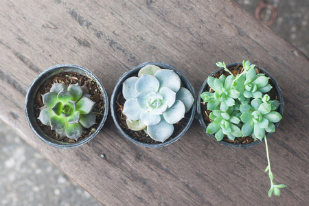 green plants: Variety of small cactus in plastic pot plant on wood table Stock Photo