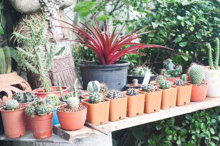The variety of small cactus pot plant