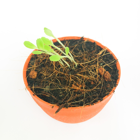 Plant growth-Baby plants growing in a small pot