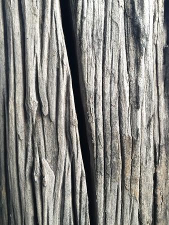 Striped skin of Old Dead tree