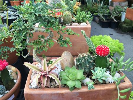 ollas de barro: Variedad de vasijas de barro Cactus en el jardín de mercado