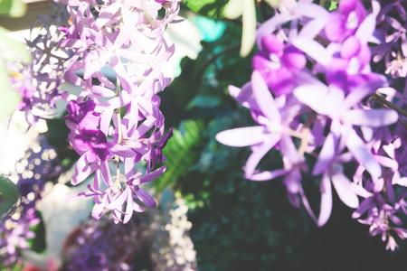 Blooming violet flowers, Selective focus