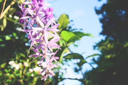 Blooming purple flowers with blue sky Stock Photo