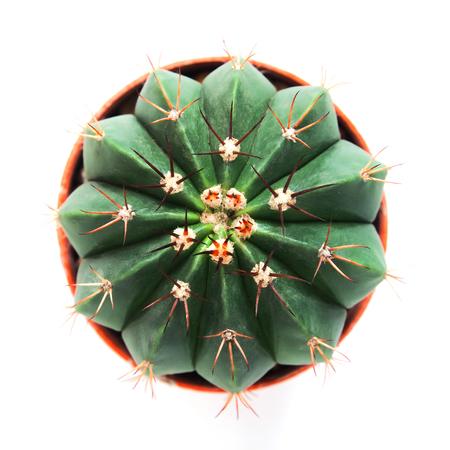 Directly above of beautiful shape cactus on white background  Stock Photo