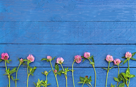 red clover: row of blossoming red clover on blue wood planks, background