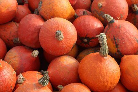 heap of Hokkaido pumpkins, full framed Stock Photo