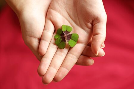 hands of a woman holding a four-leafed clover, red background, top view Stock Photo
