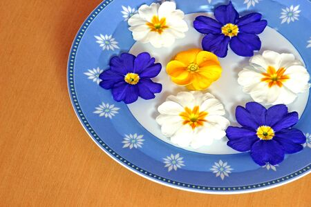 colorful primrose blossoms swimming in a blue bowl on a wooden table