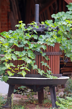 close-up of a wine press, overgrown with a vine plant, standing in front of a barn Stock Photo