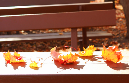 colorful autumn leaves lying in sunlight on a table in a beergarden