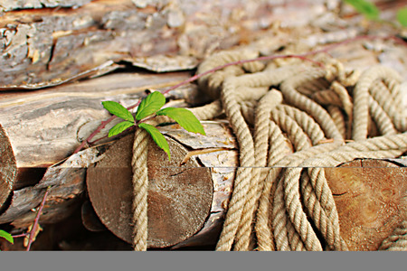 still life, rope lying on a stack of wood, blackberry tendril on top Standard-Bild