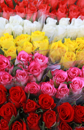 multi colored rose bunches standing side by side at a market Standard-Bild