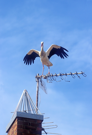 stork sitting on an antenna, spreading its wings Banco de Imagens