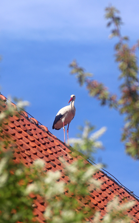 stork standing on a roof in front of blue sky, branches in the foreground