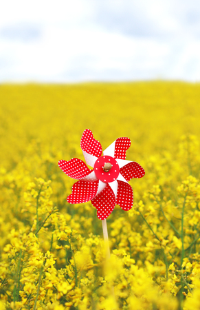 red pinwheel toy in a yellow blooming rape field, blue and white sky in the back