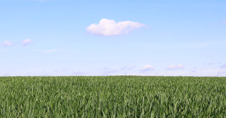 natural background with a green field and blue sky with a white cloud, web banner
