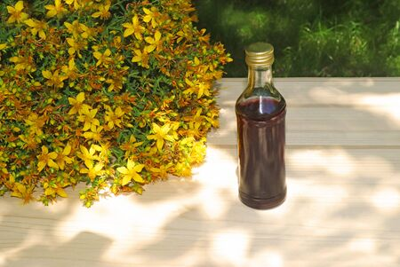 bunch of St. Johns wort blossoms and a bottle with St. Johns wort oil on a wooden table in a garden