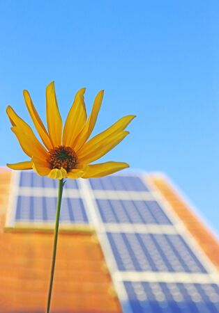 solar panels on the rooftop of a domestic building in front of clear blue sky, sunflower in the foreground