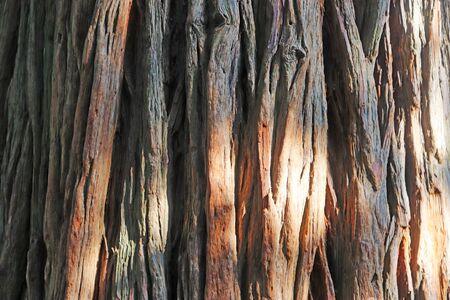 red cedar bark, full frame of the bark texture