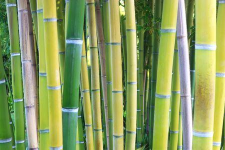 bamboo copse, full frame