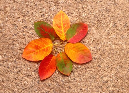 pattern of  multi colored autumn leaves arranged on a rough stone background
