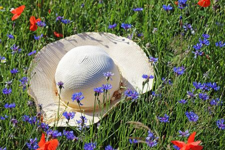 lady sunhat lying in a colorful wildflower meadow with poppies and cornflowers