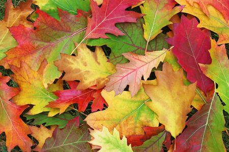 heap of autumn leaves with vibrant colors lying on grass, autumn background with copy space
