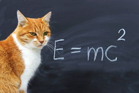 red tabby cat sitting in front of a blackboard with the Einstein formula and looking into camera