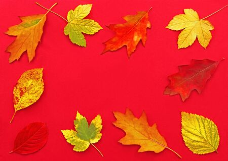 frame of multi colored autumn leaves lying on red background with copy space