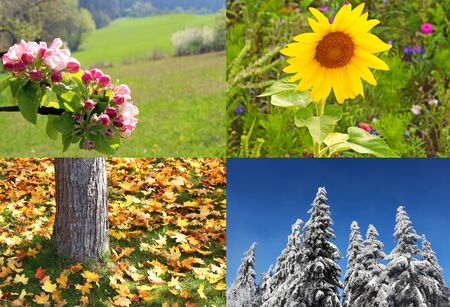 four seasons springtime, summer, autumn and winter colliding, spring with apple blossoms, summer with a multi colored flower meadow, autumn with a colorful leaf carpet and winter with snow and blue sky