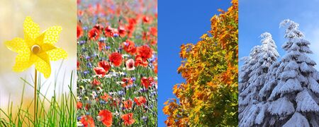 nature collage with a spring, summer, autumn and winter impression Stockfoto