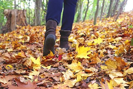 walking through multi colored foliage in an autumn forest, rear view of female legs with blue trousers and brown boots Stockfoto
