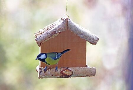 closeup of a blue tit sitting in feeder, nature background with copy space 版權商用圖片